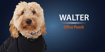 Walter - Office Pooch